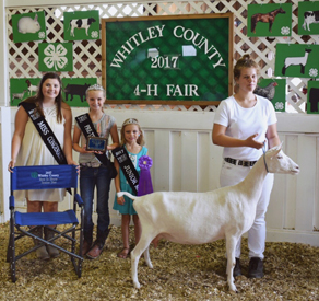 High Noon Feeds | 2017 State Goat Winners